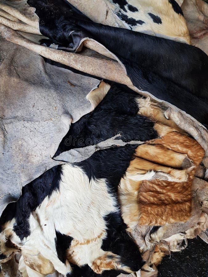 Matéria prima de couro da vaca fotografia de stock