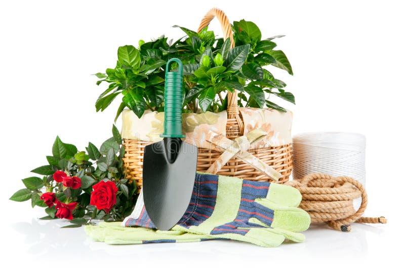 Matériel de jardin avec des fleurs et des plantes vertes photos libres de droits