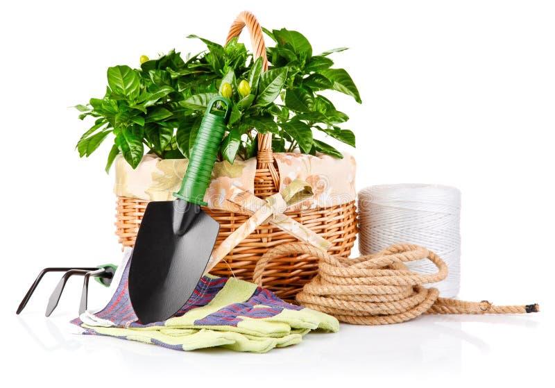 Matériel de jardin avec des fleurs et des plantes vertes image libre de droits
