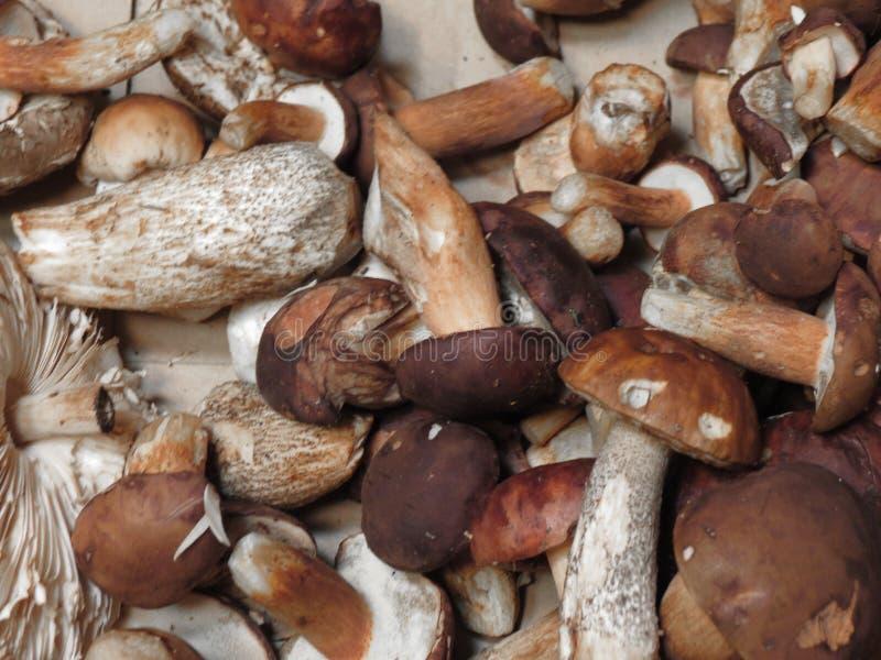 Mat för Porcini stensoppchampinjon royaltyfri bild