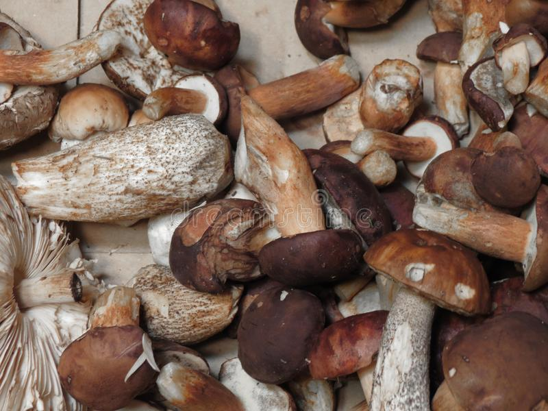 Mat för Porcini stensoppchampinjon royaltyfri fotografi