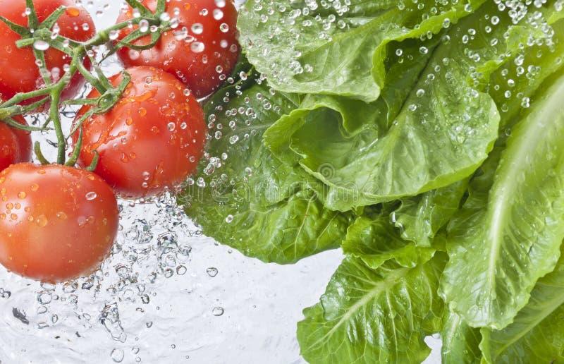 Mat för sprej för grönsallattomatvatten royaltyfri foto