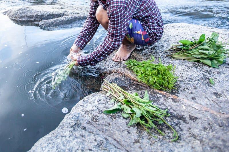 Mat i natur, asiatiska kvinnliga tvättande lösa ätliga växter i vattenström, den nya ormbunken och vattenspenat på vaggar längs e arkivbild