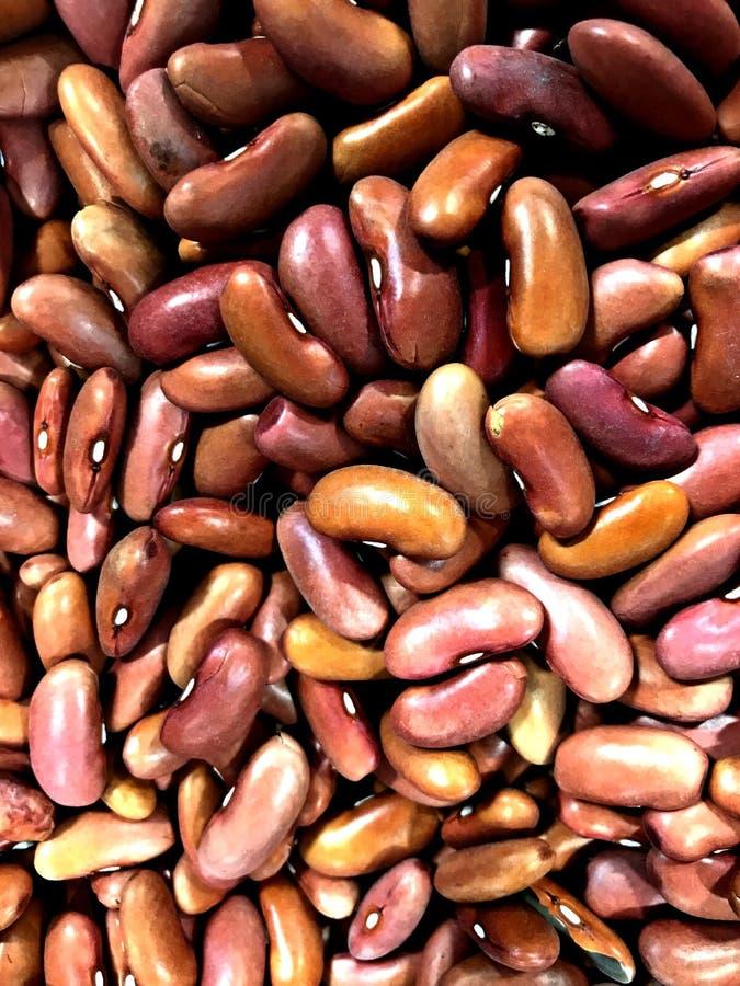Mat njurebönor, rödaktig brun färg, packat protein royaltyfri fotografi