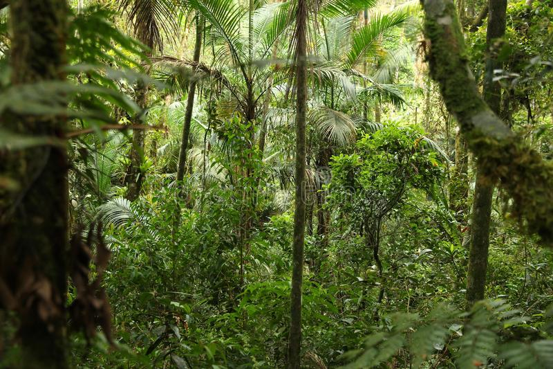 Mata Atlantica, Brazil. Brazil nature. Jungle flora in Serra dos Orgaos National Park. Mata Atlantica (Atlantic Rainforest stock photos