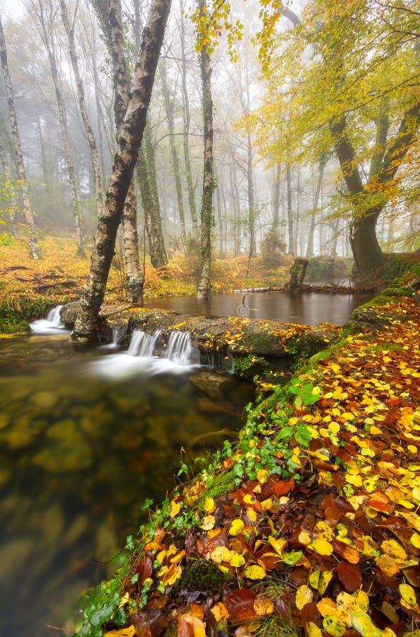 Mata da Albergaria i den Geres nationalparken, Portugal arkivfoton
