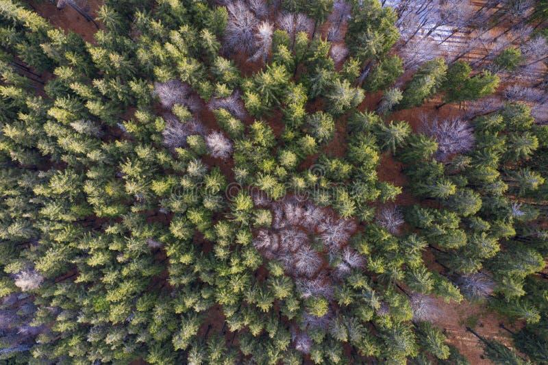 Mata mista do ponto de vista aéreo Escaravelho-da-índia atacando a floresta fotos de stock royalty free