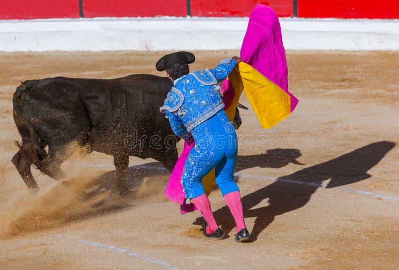 Matador och tjur i touradatjurfäktningen - Moita Lissabon Portugal royaltyfria foton