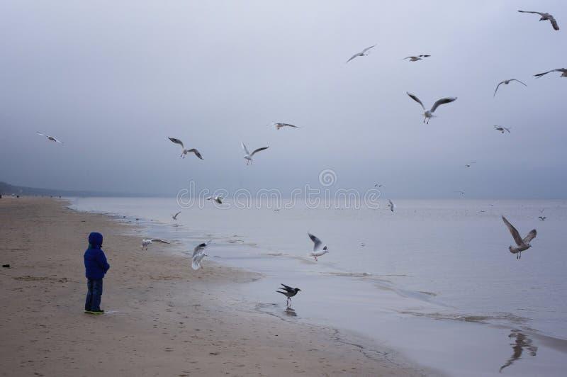 Matande fiskmåsar för pojke på stranden Pysen står på stranden havet på kall blåsig dag arkivbild