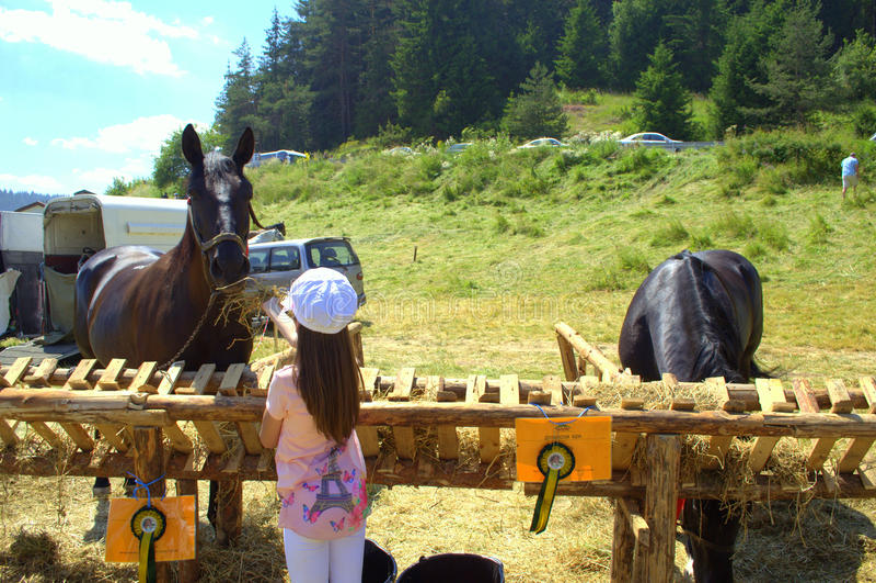 Matande häst för flicka på boskaputställningen arkivfoto