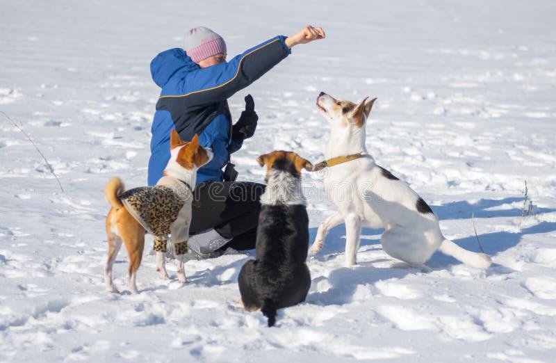 Matande hundkapplöpning för kvinna, medan utbilda några enkla kommandon arkivbild