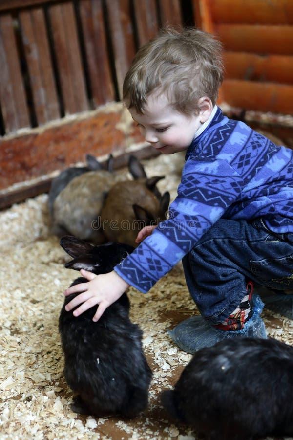 Matande kaniner för unge arkivbilder