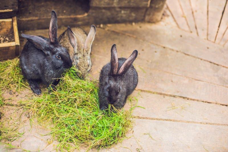Matande kaniner på djur lantgård i kanin-kaninbur arkivbild
