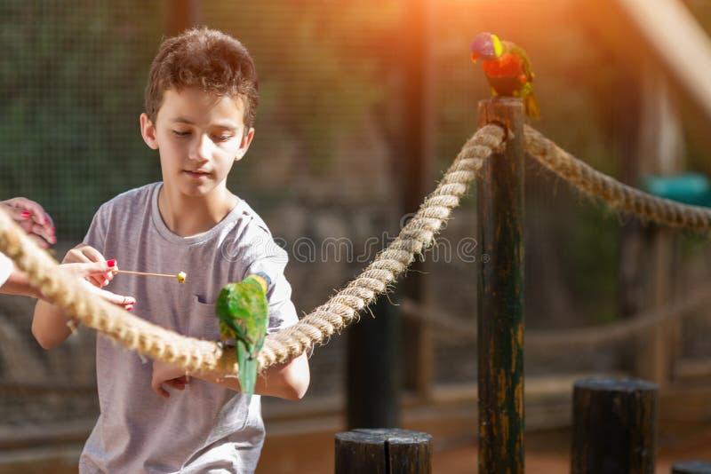 Matande papegojor f?r pys i zoo n Israel fotografering för bildbyråer