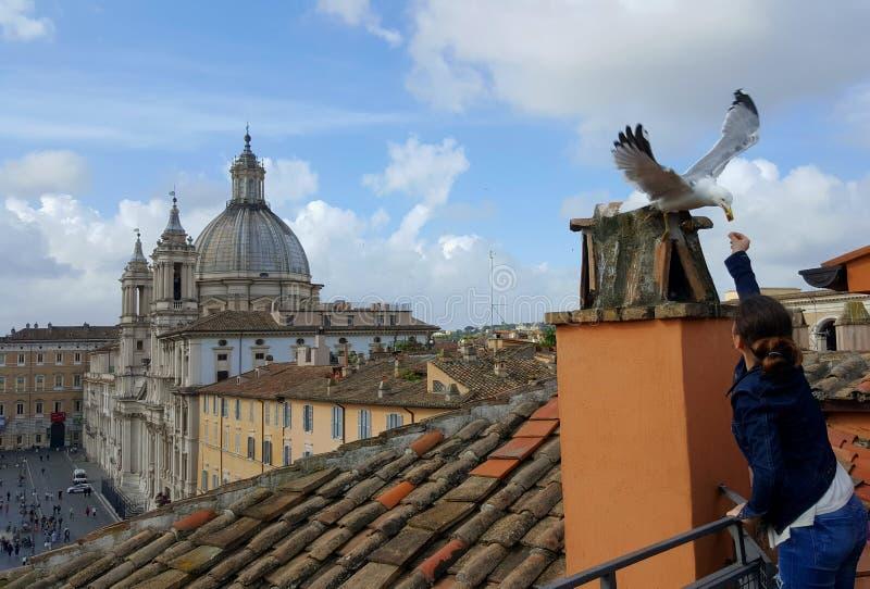 Matande seagull för flicka, piazza Navona, Rome, Italien royaltyfri fotografi