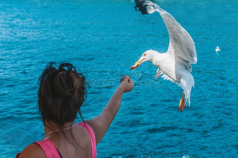 Matande seagulls för kvinna Seagulls flyger över himlen för att ta mat från händerna av kvinnor royaltyfri foto