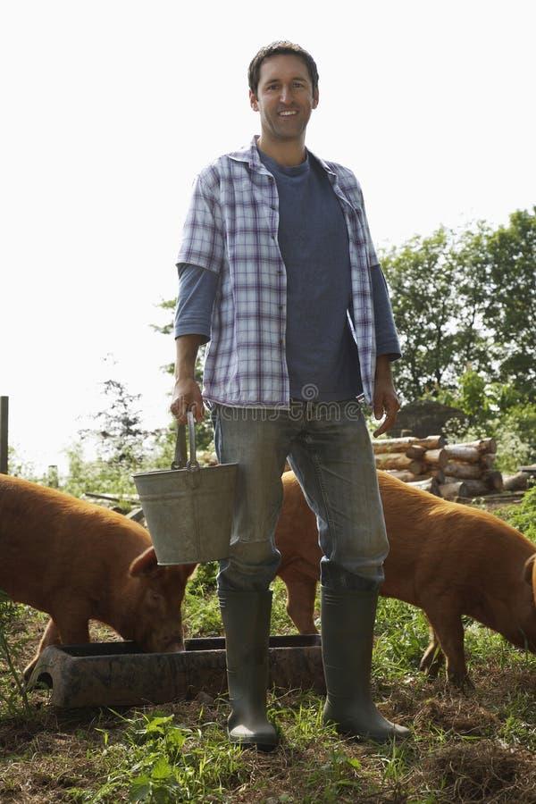 Matande svin för man i vagel royaltyfri foto