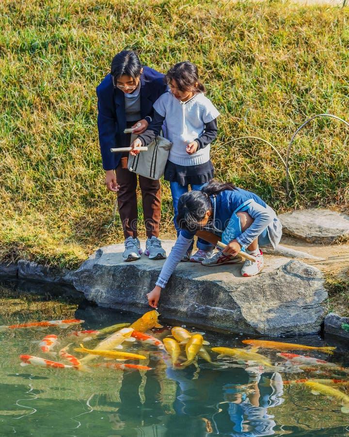 Matande utsmyckad karp på Korakuen i Okayama royaltyfria foton
