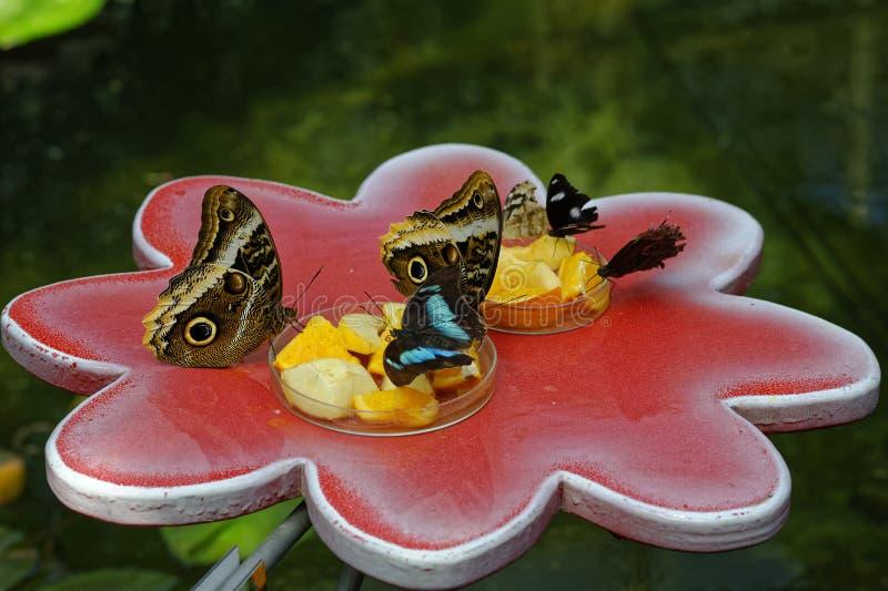 Matande utställning för fjäril arkivbilder
