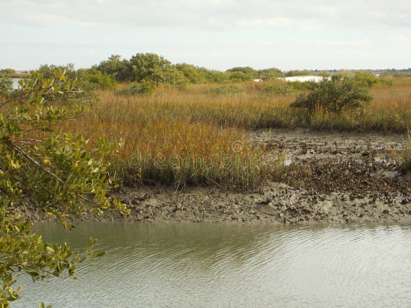 Matanzas-Fluss-Küstenlinie stockfotos
