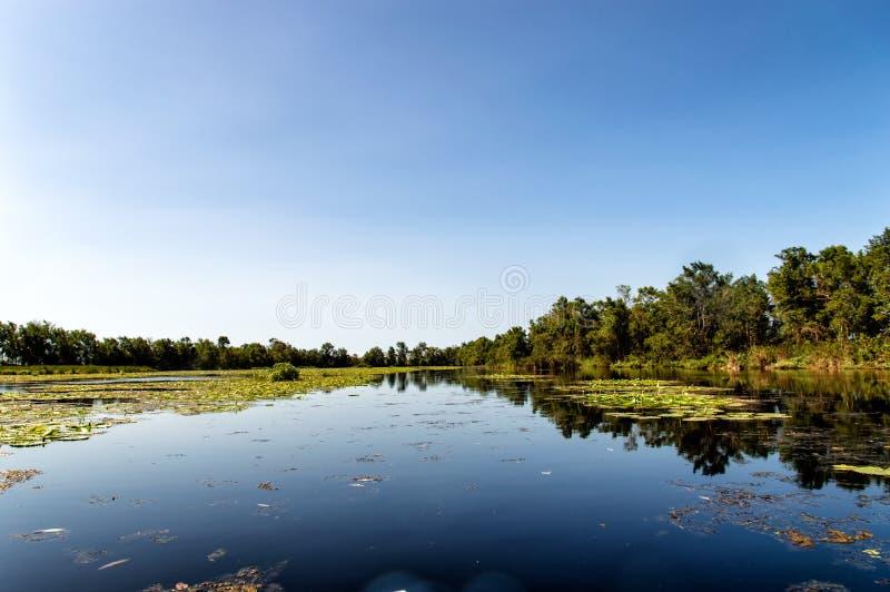 Matapica-Sumpf stockbild