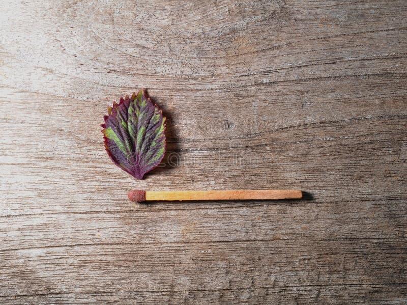 Match med ett remsablad p? tr?bakgrund royaltyfria foton