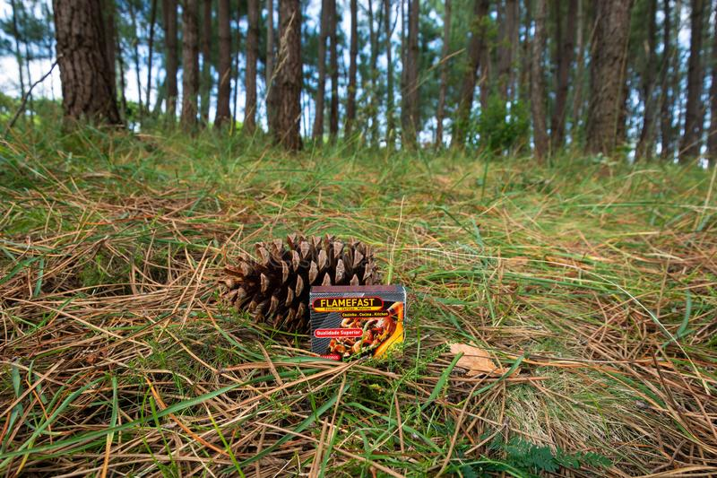 Matches box in a pinetree forest stock photos
