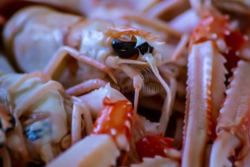 Matdetalj skaldjur som är klar att vara ätit rått scampi en av de mest läckra sommarfoodsna arkivfoto