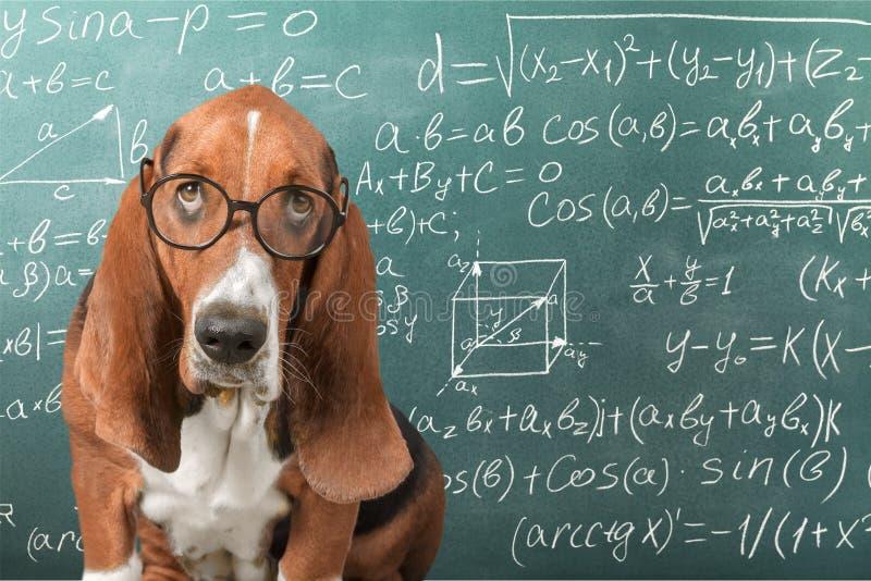 matemáticas foto de archivo