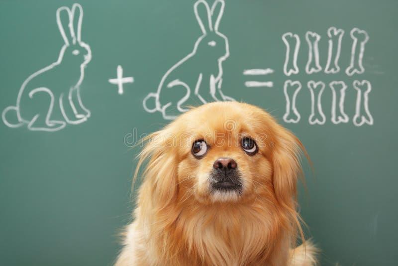 matematico immagini stock
