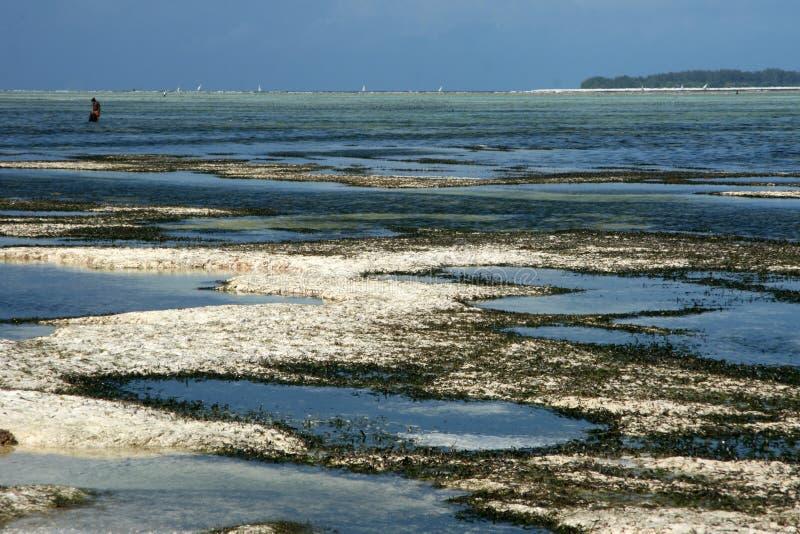 Matemwe strand, Zanzibar royaltyfria foton