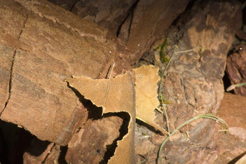 Material da microplaqueta de madeira, textura de madeira, casca áspera imagem de stock