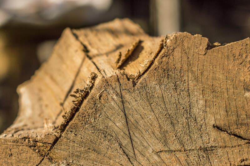 Material de madeira foto de stock royalty free