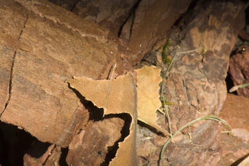 Material del pedazo de madera, textura de madera, corteza áspera imagen de archivo