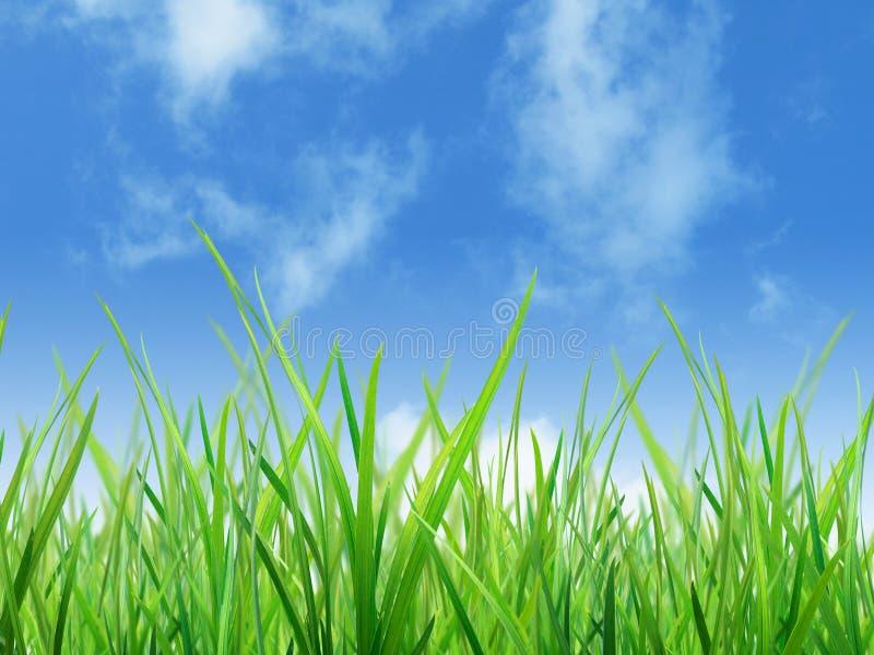 Materiale di erba fotografie stock libere da diritti