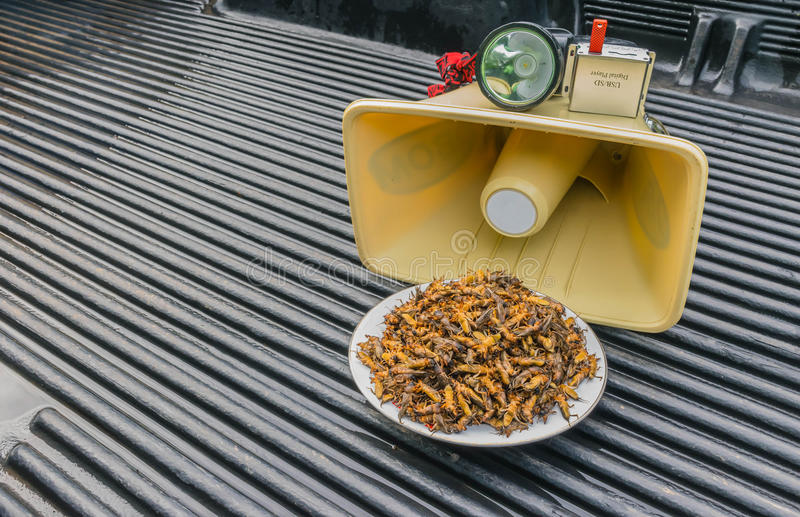 Materials equipment for the trapped insect, mole cricket, on the pickup floor such as the speaker, amplifier, Mp3 audio, flashligh royalty free stock photo