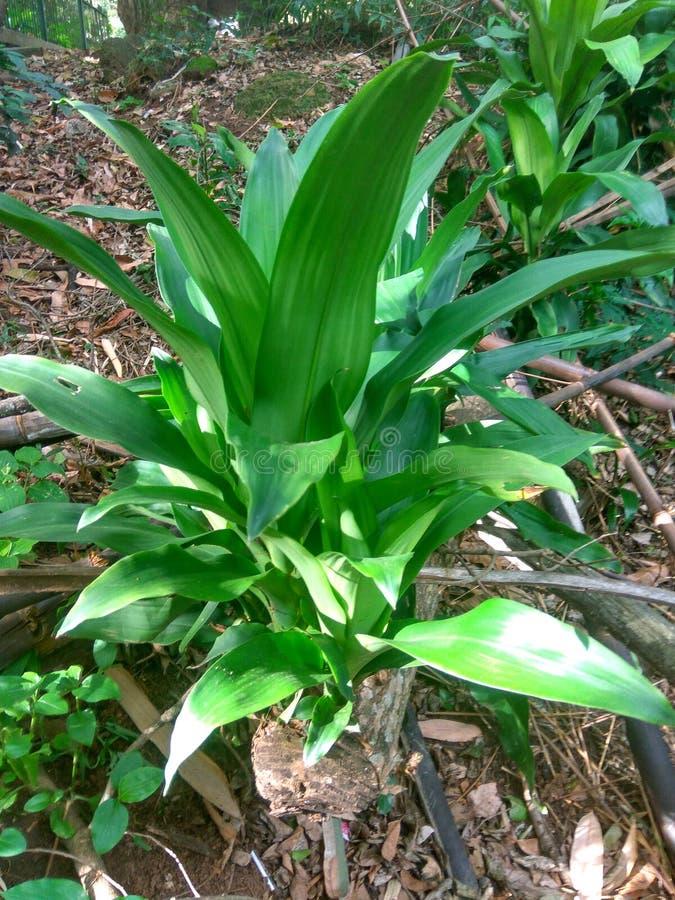 Materielbild för lös växt fotografering för bildbyråer