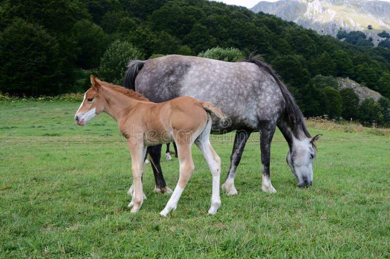 Maternal affection stock photos