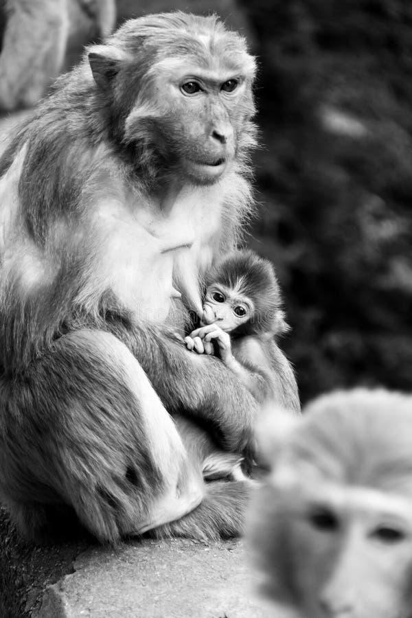 Maternità fotografie stock libere da diritti