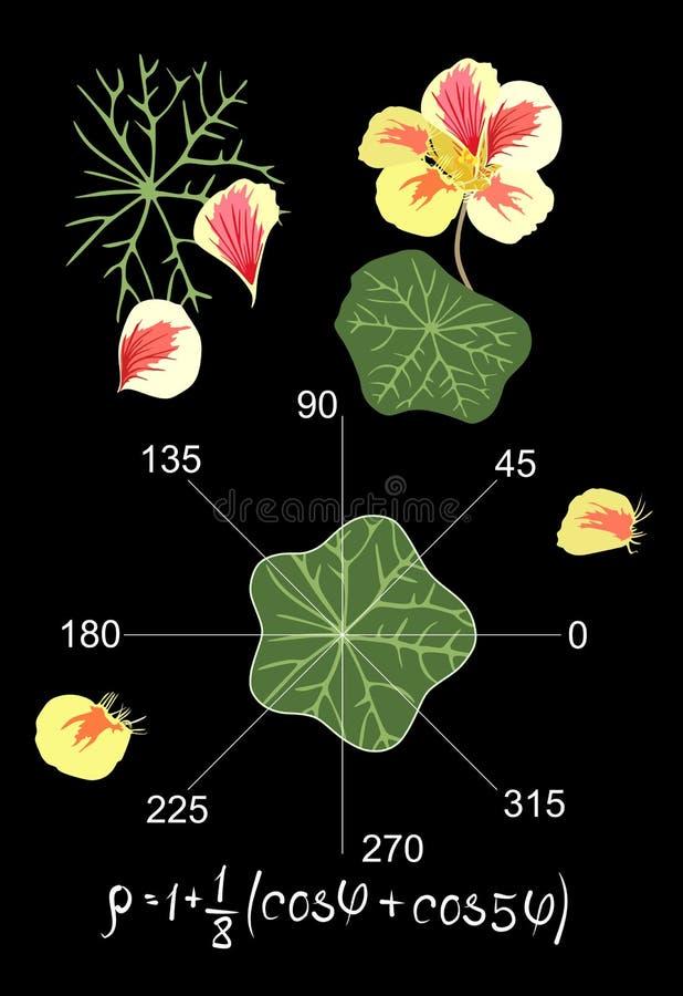 Mathématiques de divertissement Équation trigonométrique et graphique décrivant la forme d'une feuille du nasturce Belle carte illustration de vecteur