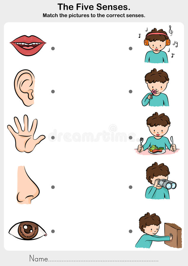 Math the picture to the correct five senses - touch, taste, hearing, sight, smell. Worksheet for education vector illustration