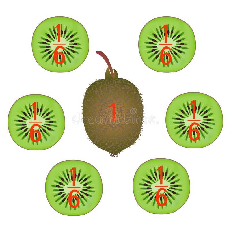 Mathematische Spiele für Kinder Studieren Sie die Bruchzahlen, Beispiel mit einer Kiwi stock abbildung