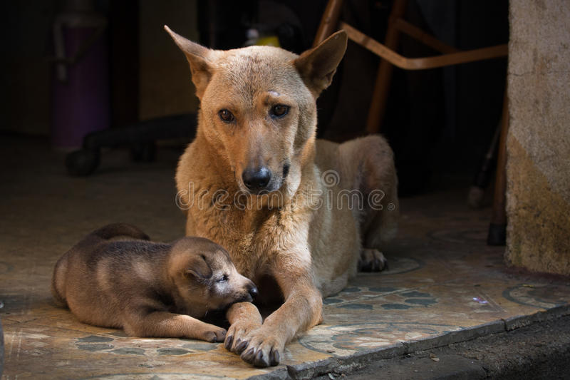 Mather and baby dog royalty free stock photography