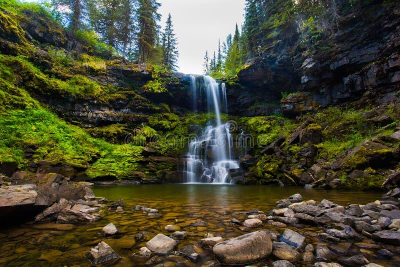 Matherson baja cascada en el bosque alpino sub en la Columbia Británica de Fernie imagen de archivo libre de regalías