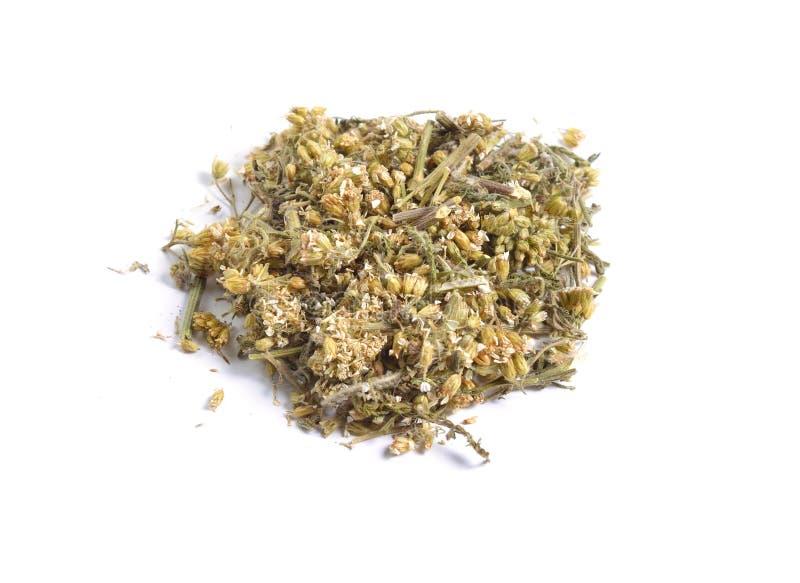 Matières premières sèches d'herbes médicinales d'isolement sur le blanc Achillea images stock
