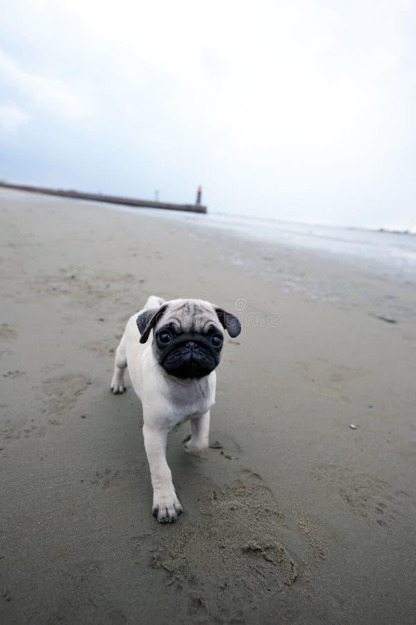 Matilda en la playa imagen de archivo libre de regalías