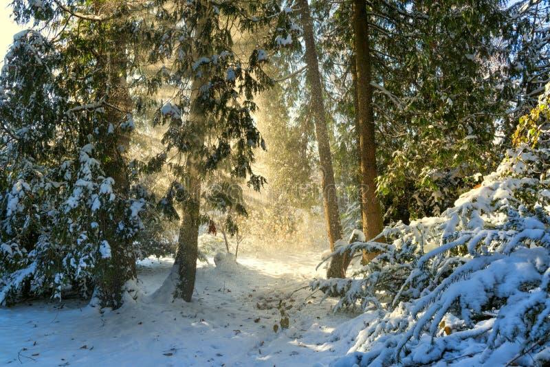 Matin étonnant d'hiver avec des rayons du soleil photographie stock libre de droits