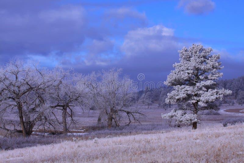 Matin avec les arbres congelés image libre de droits