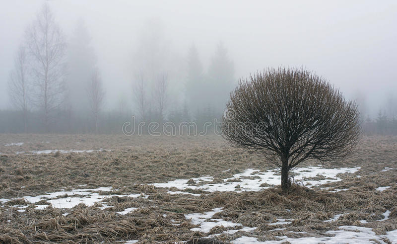Matin brumeux photographie stock