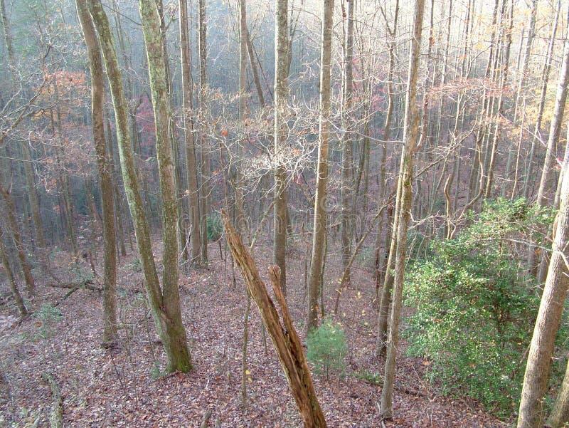 Matin brumeux, Appalachia, Ridge bleu photo libre de droits